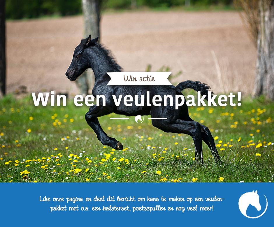 Facebook Post paardenetc